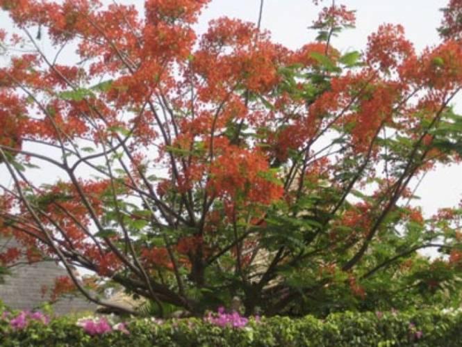 Photo 5 du La résidence - Les jardins de Popenguine à Saly, Sénégal