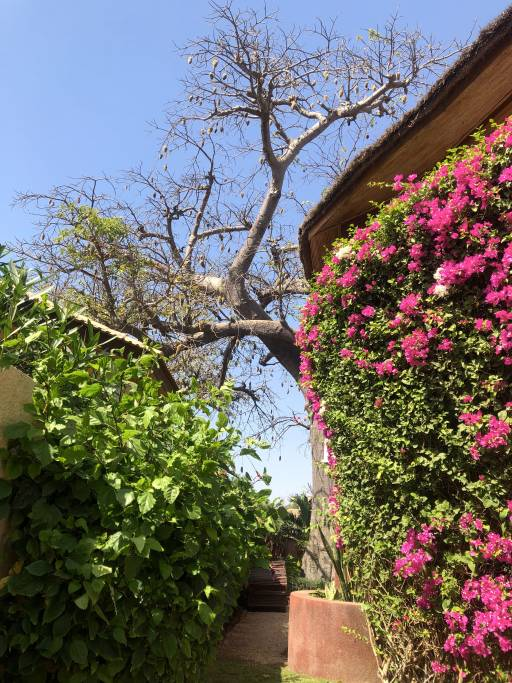 Photo 11 du Le jardin de la maison